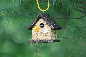 bird in birdhouse